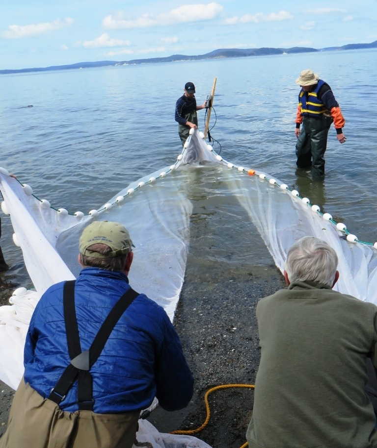 Salish Sea Stewards