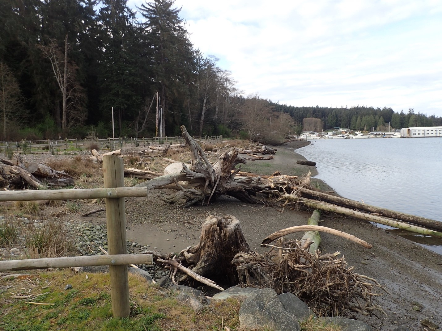 Cornet Bay Nearshore Habitat Restoration