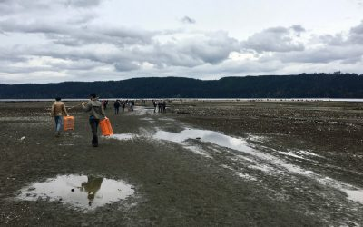 Hood Canal Regional Pollution Identification and Correction Program